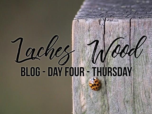 blog title4